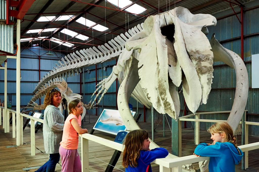 ANNUAL PASS - Albany's Historic Whaling Station