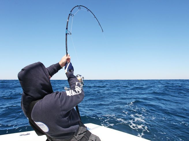 Exclusive day fishing Charter