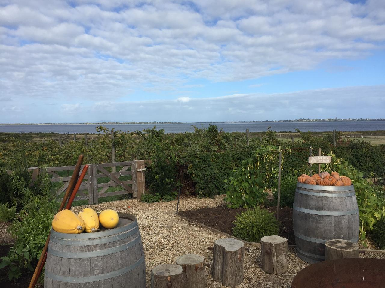 Guided Gourmet Food and Wine Cycle Tour Queenscliff Bellarine Peninsula