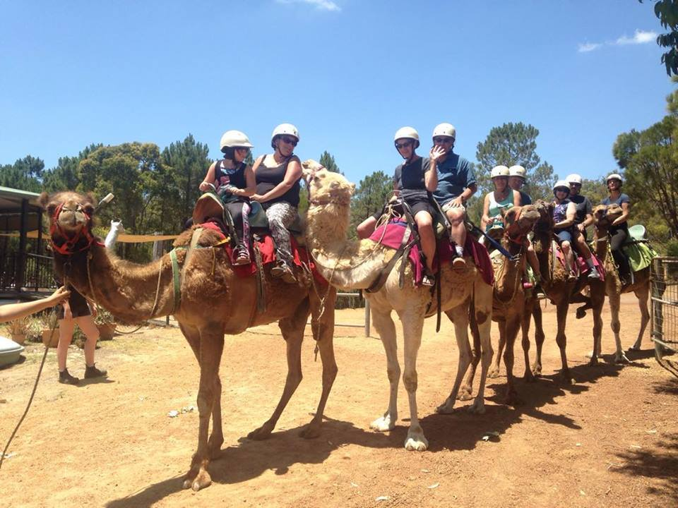 Caversham Wildlife Park and Camel Ride Tour