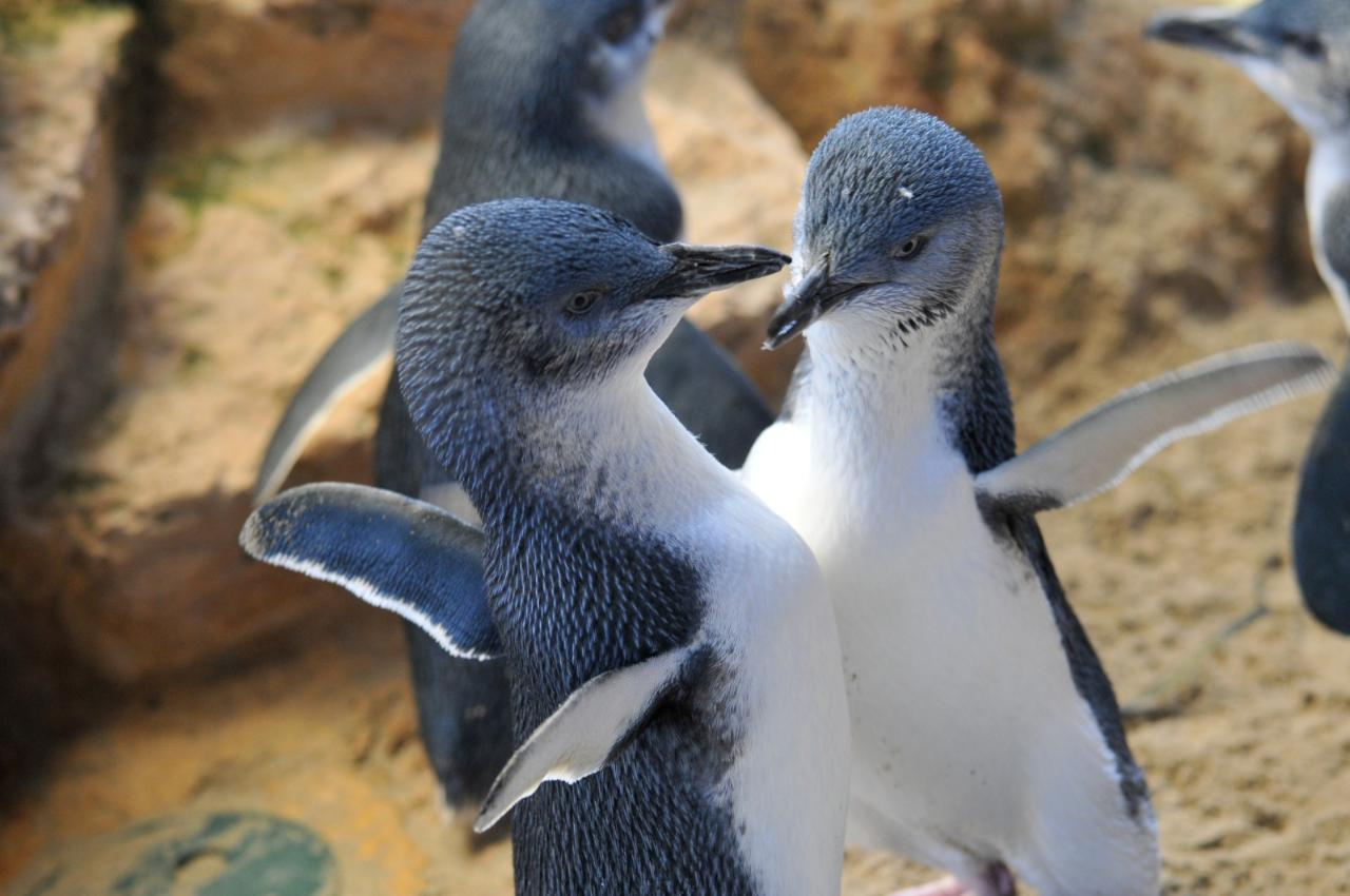 Penguin Island, boat cruise and Caversham Wildlife Park private full day