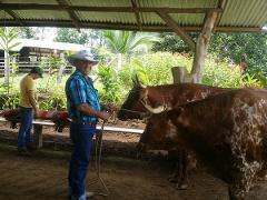 San José to Arenal Day Tour: Campesino Farm Visit + Lunch + Hot Springs + Dinner