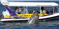 Sydney Whale Watching by Sea or Air