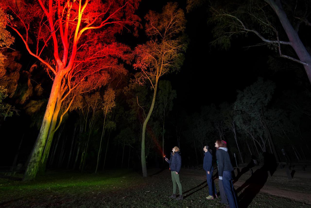 Carnarvon Night Safari