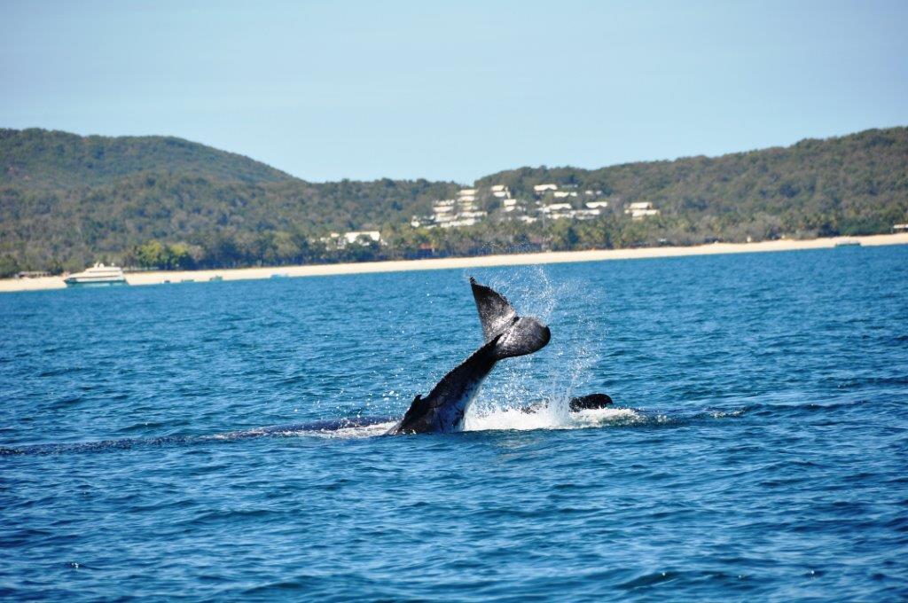 Whale Watching Gift Voucher