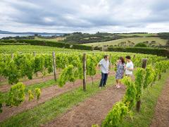 Matakana Wine and Food Tour