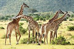 Family Fun With Kids In Cape Town Private Tours.