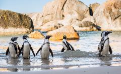 Penguin Tours Cape Town and Boulders Beach