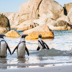 Luxury Golf Tours South Africa Including Full Day 18 Hole Near Cape Town