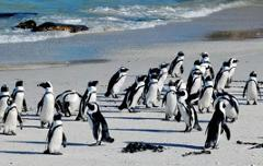 Full Day Best of the Cape Private Tour