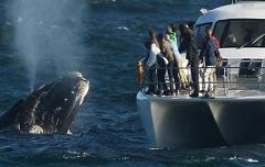 Whale Watching Private Tour & Hermanus wine tour