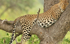 Private Wildlife day Safari  tour from Cape Town (All Inclusive)