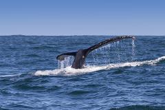 Hermanus Whale Watching Tour & Private Wine Tasting
