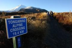 Exclusive Half Day Volcanic Explorer Guided Walk