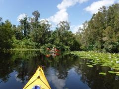 1 Day Noosa Everglades Guided Kayak Tour