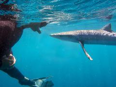 Blue & Mako Shark Expedition
