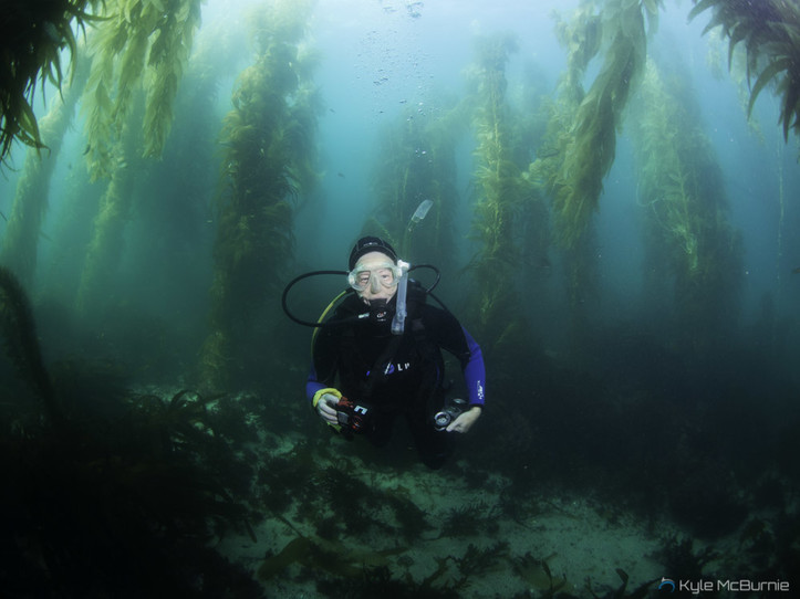 Guided Dive - La Jolla Cove Kelp Forest
