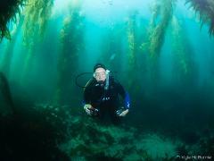 Guided Dive - La Jolla Cove Kelp Forest
