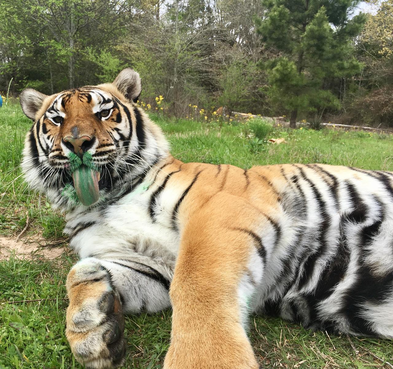 Texas Animal Sanctuary Experience