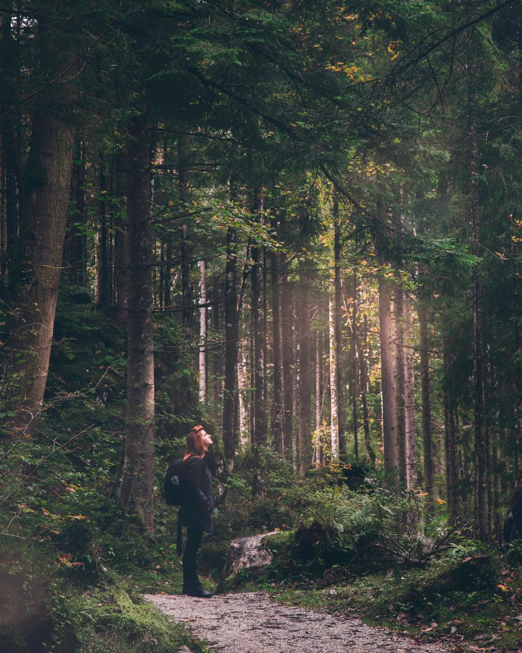 Forest Bathing + Rock Climb in Hocking Hills, OH