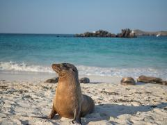 Galapagos Islands and Underwater Adventure