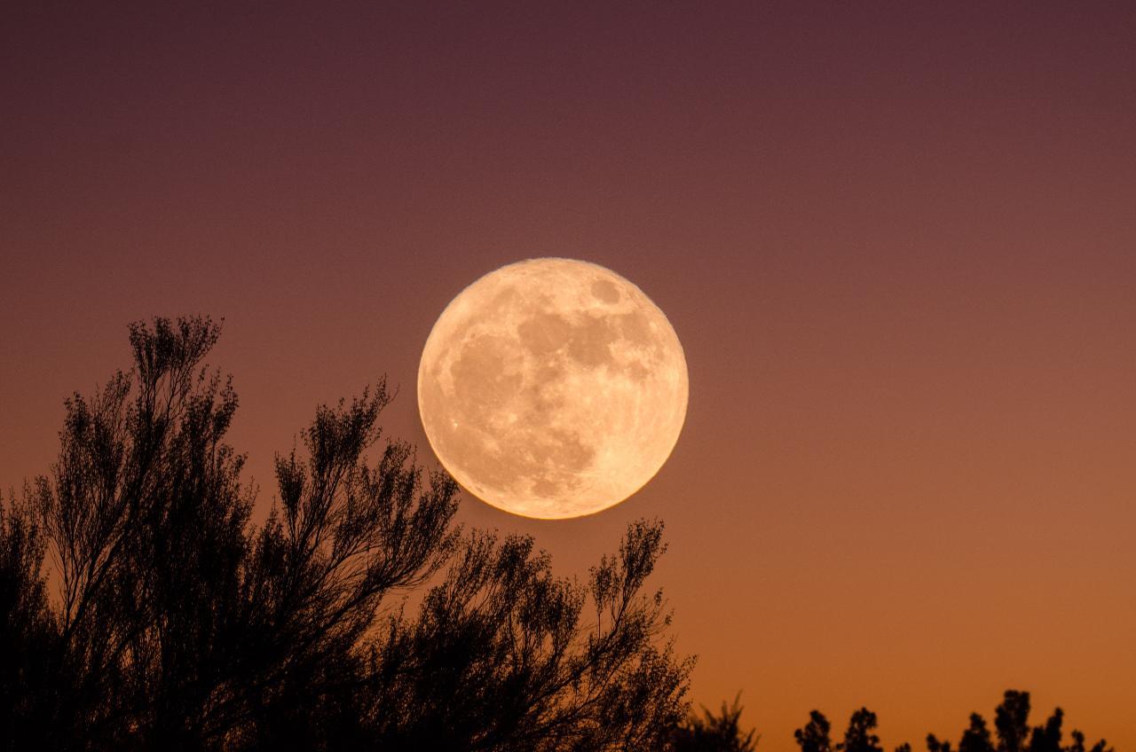 Kentucky Full Moon Tree Climb