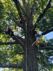 Tree Climbing in Kansas City