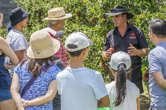 A 'Pick Your Own'- Stone Fruit Experience