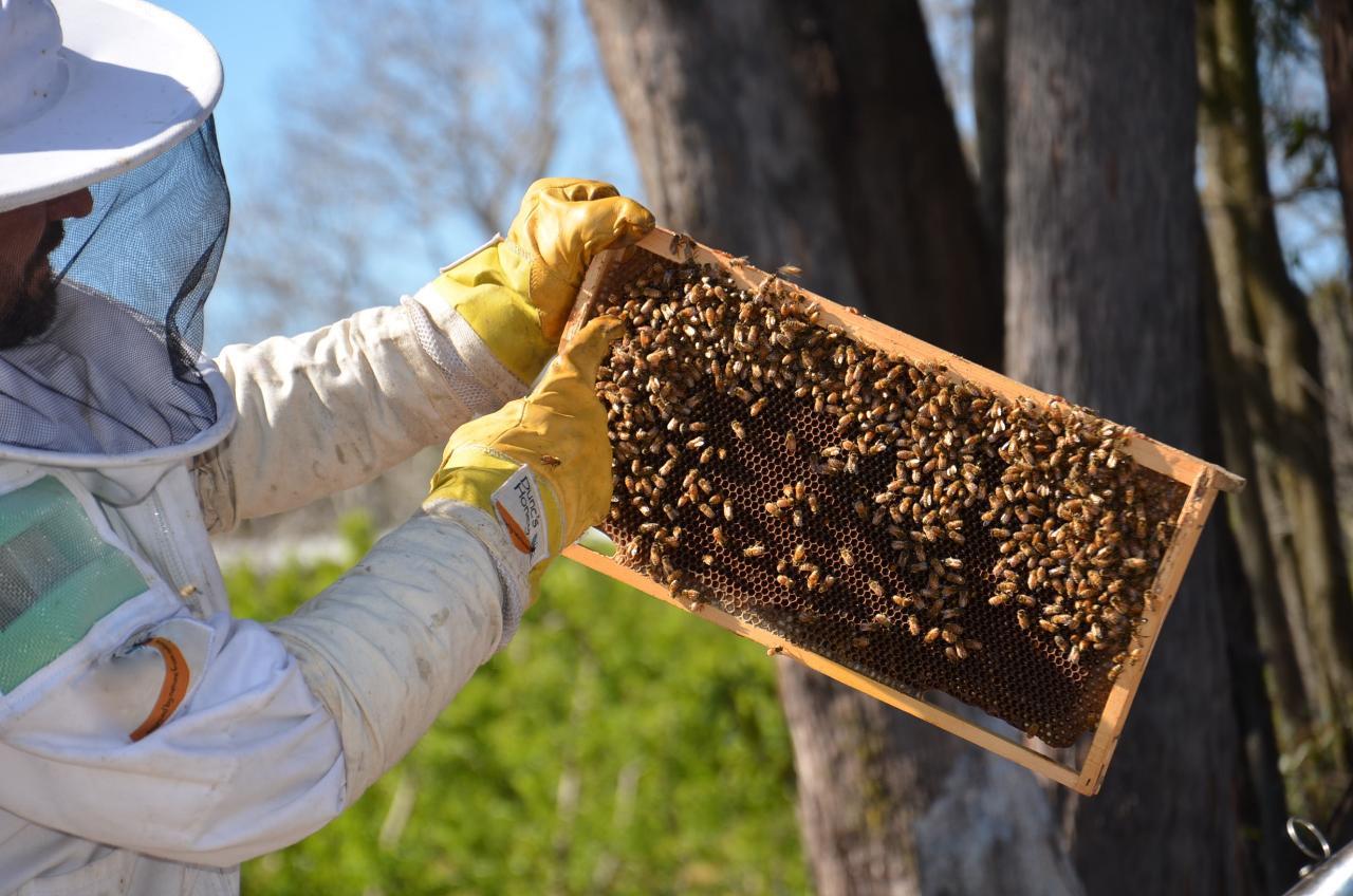 Junior Honey Bee Keeper Experience