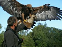 Full Day Falconry Experience