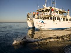 May 2017 - Dolphin Watching Cruise at Jervis Bay