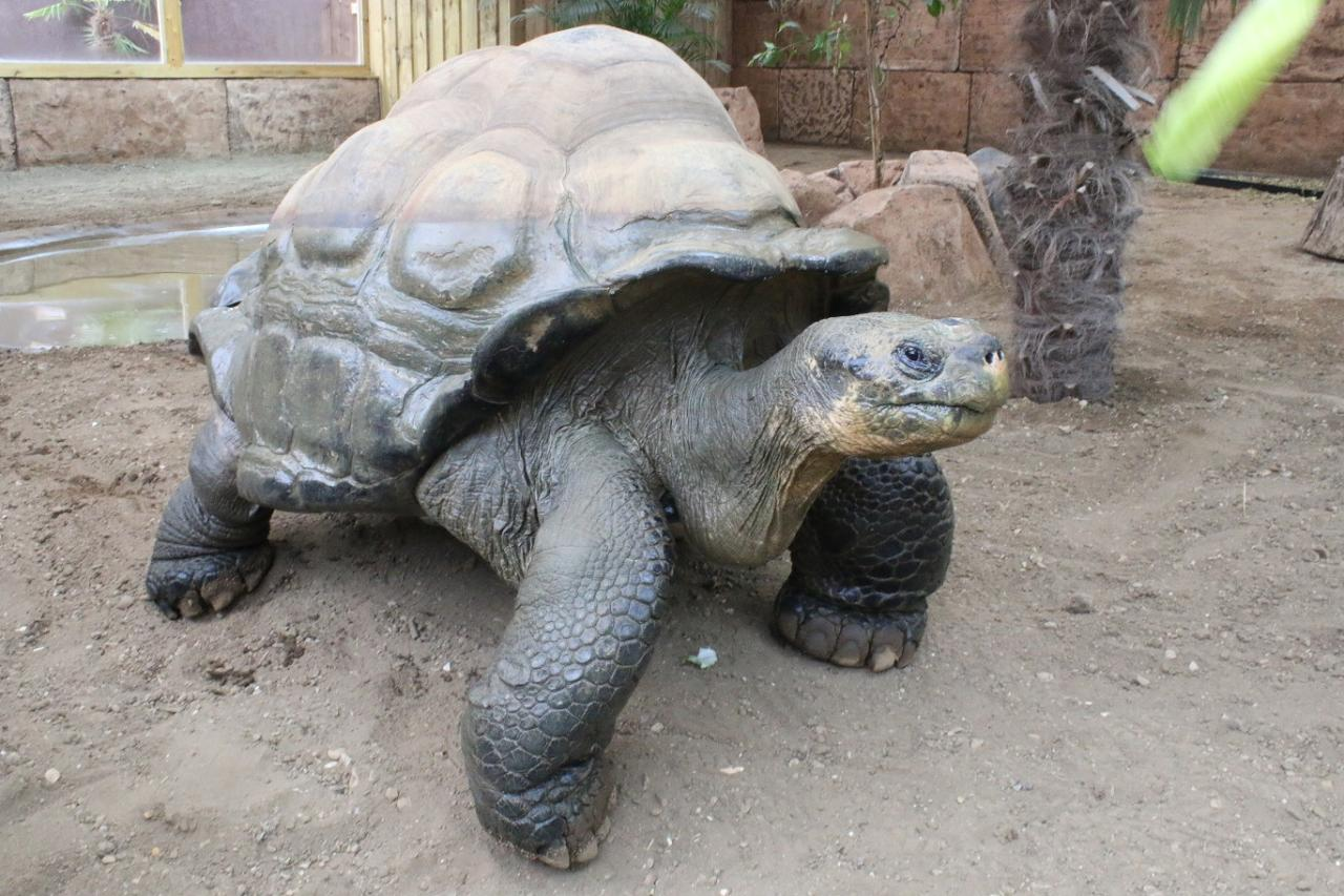 Galapagos Tortoise Experience