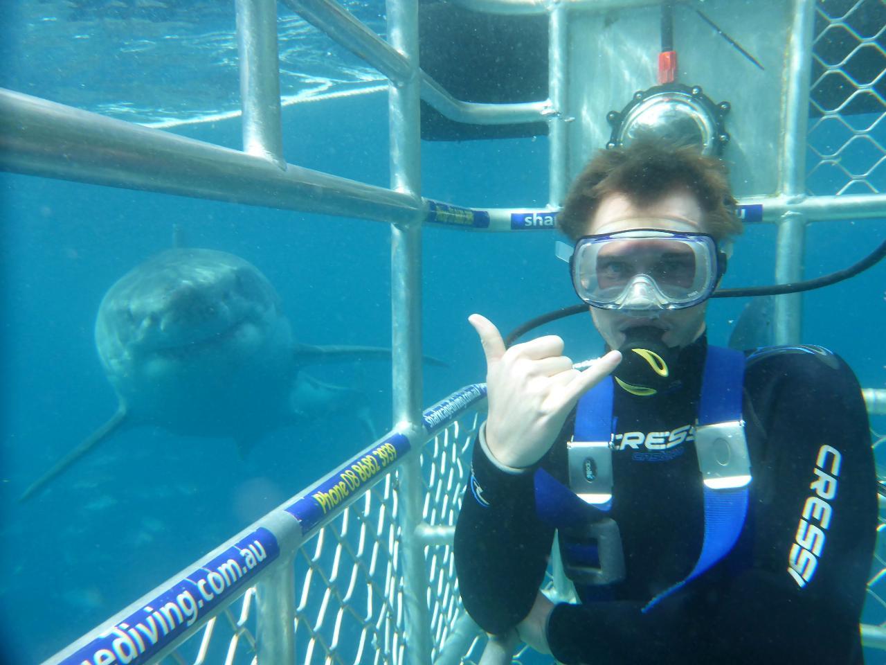 Shark & Sealion Combo