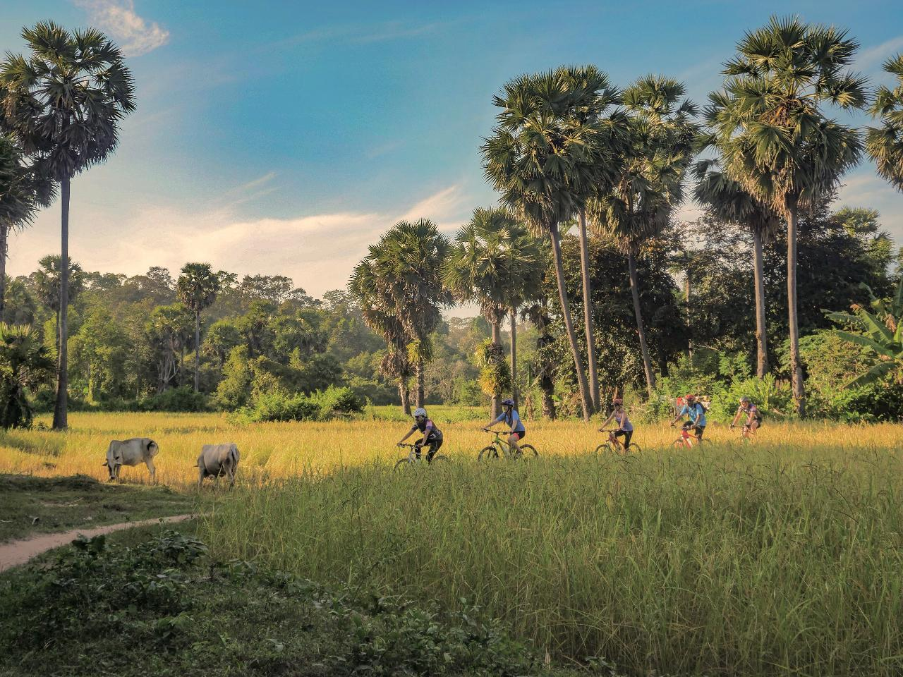 Hidden Angkor Conservation Cycle