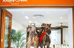 Camel Ride and Pearl Harvest - Perth