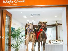 Camel Ride and Pearl Harvest at Elizabeth Quay