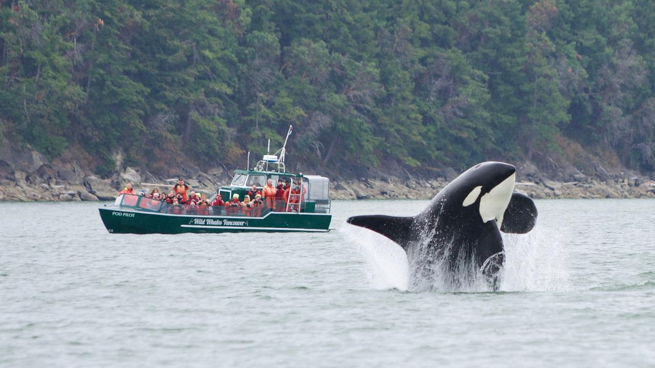 Whale Watching - Open Boat (3-6 hours)
