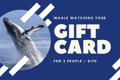 Gift Card - Small Boat Whale Watching Adventure for 2 People
