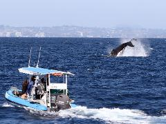 3 Day Humpback Whale Research Expedition