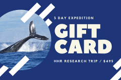 Gift Card - 3 Day Humpback Whale Research Expedition for 1 person