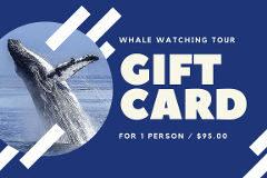 Gift Card - Small Boat Whale Watching Adventure for 1 Person