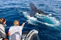 Small Boat Whale Watching & Marine Research Adventure