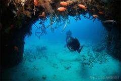 Scuba Diver - Padi Course