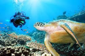 Double Dive Flinders Reef