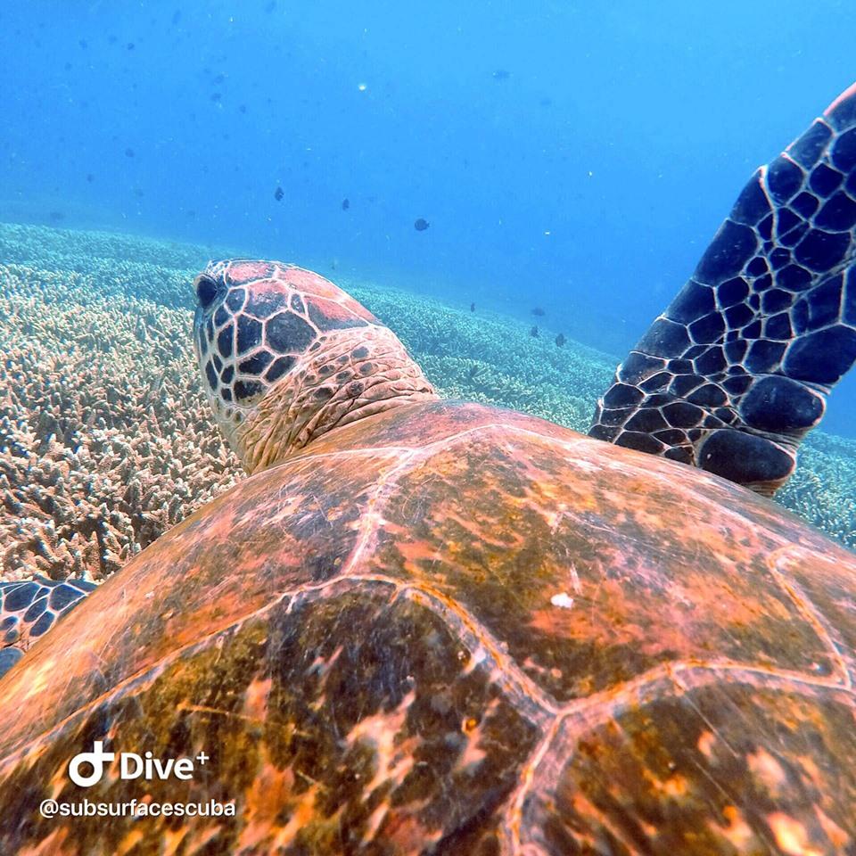 Scuba Diving Flinders Reef - Triple Dive