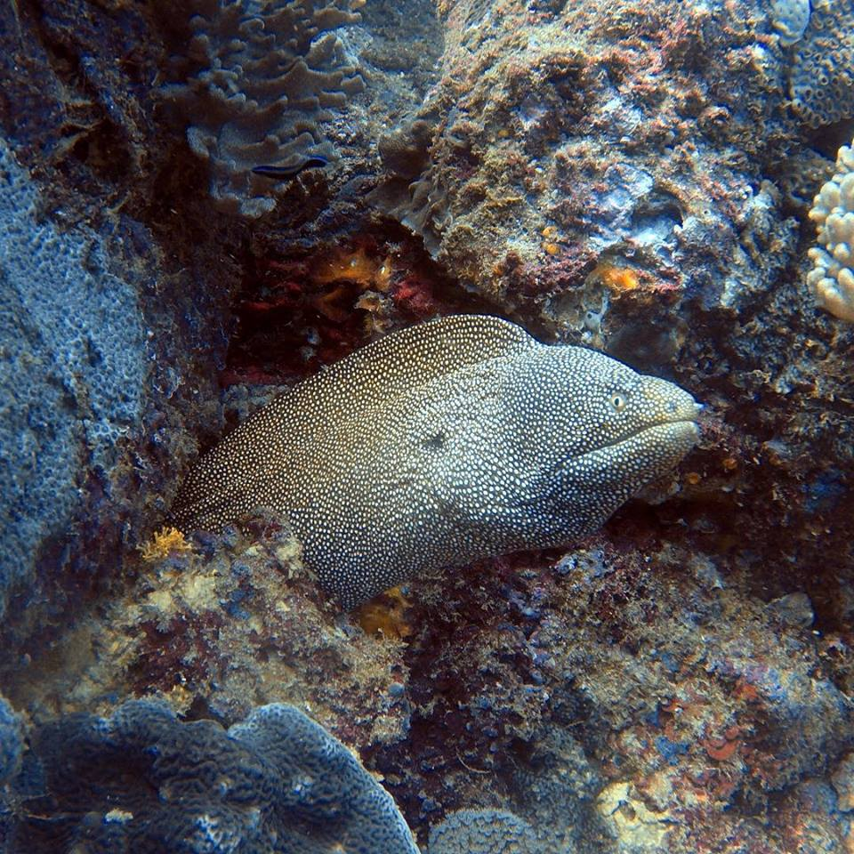 Scuba Diving Sunshine Coast Reefs - Double Dive