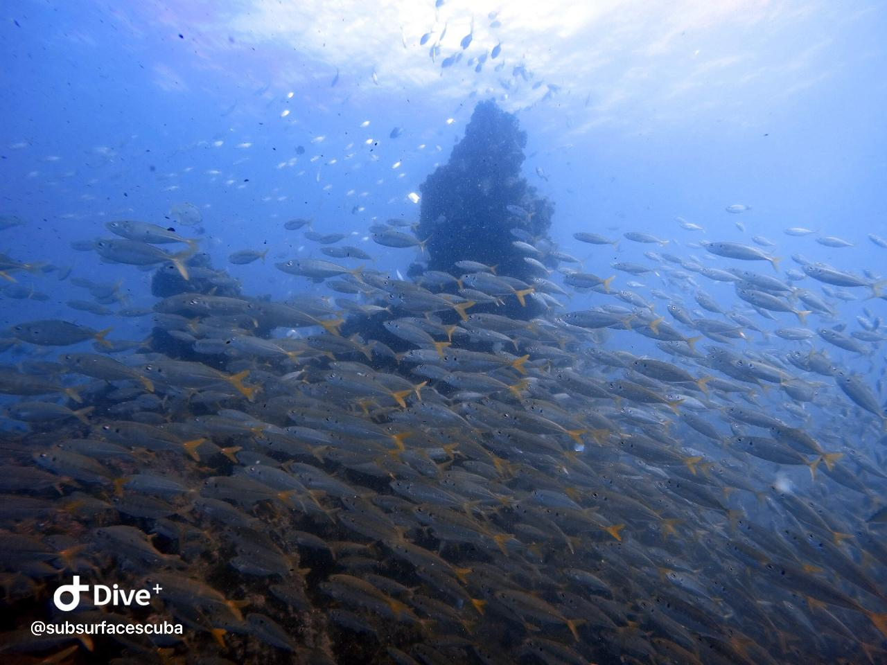 Scuba Diving Gold Coast - Scottish Prince