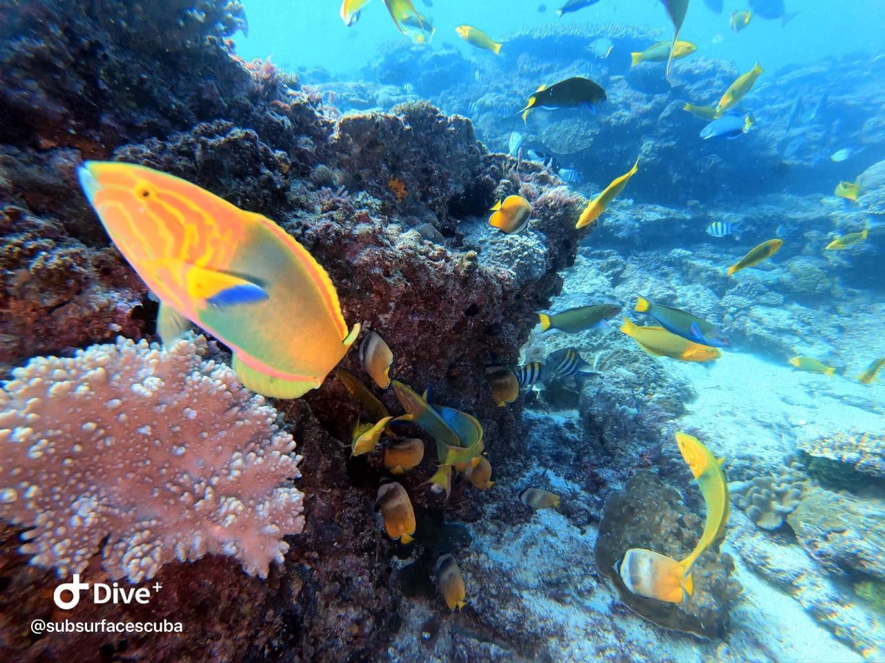 Snorkelling Adventure Flinders Reef