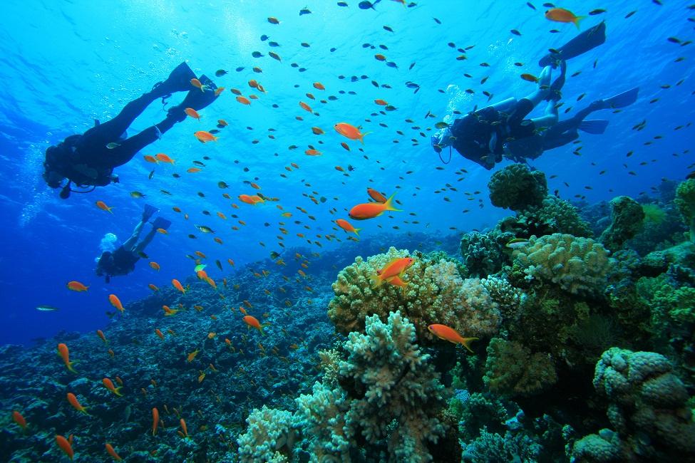 Double Dive Mudjimba Island