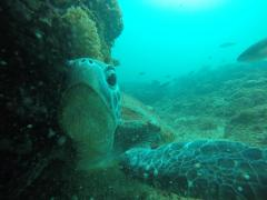 Discover Scuba Dive Sunshine Coast Reefs Double Dive